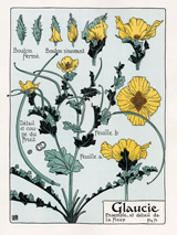 Flowers France Gardening Illustrator: Unknown Imprint: ArteHouse Nature'