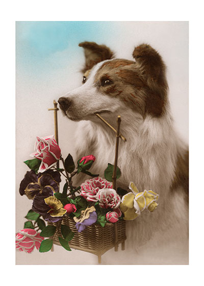 Dog w/ Flower Basket  BLANK INSIDE  Our blank notecards are custom printed at our location in Seattle, WA. They come bagged with an envelope. We love illustration art from old children's books and early, printed ephemera. These cards reflect this interest in bringing delightful art back to life.