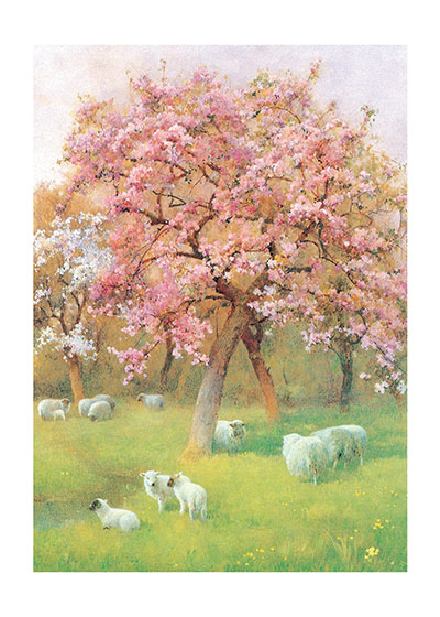 Sheep Beneath a Blossoming Tree These prints are made at our location in Seattle, WA. They have a thick, white backing board and are sealed in clear bags. Each is suitable for framing at 11 inches x 14 inches or can be used as is for wall display. Our goal is to bring back to life these wonderful illustrations from old-fashioned, children's books and from early advertising art.