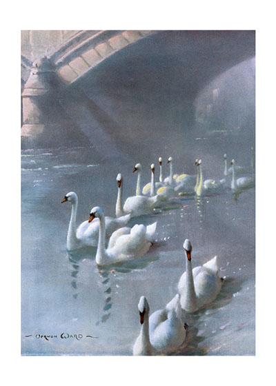 Swans Swimming Under a Bridge These prints are made at our location in Seattle, WA. They have a thick, white backing board and are sealed in clear bags. Each is suitable for framing at 11 inches x 14 inches or can be used as is for wall display. Our goal is to bring back to life these wonderful illustrations from old-fashioned, children'sbooks and from early advertising art.