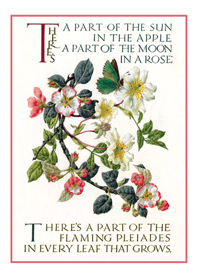 Marie Angel Apple Blossom There's a part of the sun in the apple,    There's a part of the moon in a rose;    There's a part of the flaming Pleiades    In every leaf that grows.    Augustus Wright Bamberger  British artist Marie Angel (1923 - 2010) possessed three gifts calligraphy, illumination and painting in miniature.  She gloriously combined them in many books.  This series of illuminated quotations was made for The Green Tiger Press in the 1980s.  These prints are made at our location in Seattle, WA. They have a thick, white backing board and are sealed in clear bags. Each is suitable for framing at 11 inches x 14 inches or can be used as is for wall display. Our goal is to bring back to life these wonderful illustrations from old-fashioned, children's books and from early advertising art.