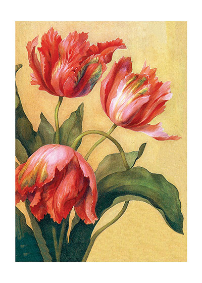 Tulips   INSIDE GREETING: Thank You  Our greeting cards are custom printed at our location in Seattle, WA. They come bagged with an envelope. We love illustration art from old children's books and early, printed ephemera. These cards reflect this interest in bringing delightful art back to life.