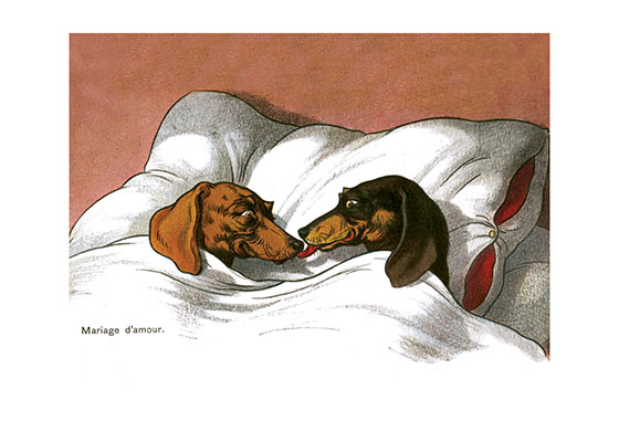 Happy Dachshund Couple These two dachshunds have, as the caption says, a Mariage d'amour, as is obvious from their affectionate attitudes toward each other.  The illustrator, Fritz Quidenus (1867-1928)  was born in what is now the Czech Republic.  He mostly worked in Munich as a painter and designer. His been steins for Villeroy & Boch are sought-after collector's items, as are his paintings and drawings.  These prints are made at our location in Seattle, WA. They have a thick, white backing board and are sealed in clear bags. Each is suitable for framing at 11 inches x 14 inches or can be used as is for wall display. Our goal is to bring back to life these wonderful illustrations from old-fashioned, children's books and from early advertising art.