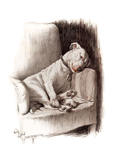 Cracker is a Silly Ass | Cecil Aldin Dog Fun Animals Art Prints Cracker, the Bull Terrier, was one of Aldin's very favorites. Cracker and Mickey, the Irish Wolfhound, were great friends and Aldin describes them helping each other according to their talents. Cracker, with his powerful jaws, would crack bones for Mickey and Mickey would use his height to reach things they wanted.