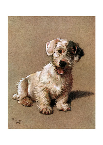 "Barry the Sealyam | Cecil Aldin Dog Fun Animals Art Prints ""This charming Sealyham Terrier is obviously a   ball dog and his alert expression is surely the anticipation of someone to throw his red ball for him."