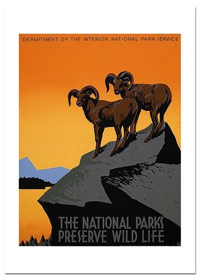 Long-horned Sheep This image is from a poster made to increase awareness of the the need to protect the animals in the National Parks; in this case the Big-horned sheep.