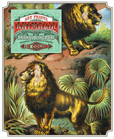 Animalia Prints We dug into our library and have come up with a magnificent set of books on animals, entitled Johnson's Household Book of Nature: Mammalia printed by electrotype in 1880. It is illustrated with stunning full color illustrations and we offer a set of 8 of them as prints,