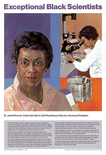 Jewel Plummer Cobb Dr Jewel Plummer Cobb was born in Chicago to physician Frank and Carrabelle (Cole) Plummer, a schoolteacher. Her grandfather, a freed slave, became a pharmacist, initiating four generations of medical practitioners. She earned a Bachelor of Science from Talladega College in 1944. She earned a Master of Science from New York University in 1947, and was awarded a Ph.D. in cell physiology from New York University in 1950.  Becoming a noted cell biologist was a difficult road for Cobb. She came from an upper-middle-class background, was in constant contact with African American professionals and was well aware of their accomplishments.  But because she was African-American, she did face segregation during the course of her education, particularly as a child.   Much of Cobb's research was focused on the skin pigment melanin, and her most significant research was with testing new chemotherapeutic drugs in cancer cells. The impact of her research is still felt today. From 1960 to 1969, she was a professor at Sarah Lawrence College, and from 1969 to 1976 she served as Dean and Professor of Zoology at Connecticut College. Dr. Cobb was elected to membership in the Institute of Medicine in 1974.   She was President of California State University in Fullerton (1981–1990), and in 1991 she became the principal investigator at Southern California Science and Engineering ACCESS Center and Network, which assists middle school and high school students from disadvantaged backgrounds pursue a future in the fields of science and engineering.  Cobb is the recipient of several honorary doctorates and many awards, including the Kilby Award for lifetime achievement in 1995. Shortly after retiring, Cobb was named California State University Trustee Professor for its Los Angeles division.  In 2001, Cobb became the principal investigator for Science Technology Engineering Program (STEP) Up for Youth—ASCEND project at California State University, Los Angeles. She also was nam