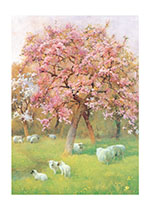 Sheep Beneath a Blossoming Tree (Nature's Beauty Greeting Cards)