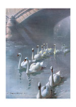 Swans Swimming Under a Bridge (Sympathy Greeting Cards)