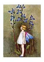 Fairy With Blue Lobelia (Ida R. Outhwaite Fairies Greeting Cards)
