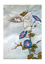 Fairy and Fairy Baby (Ida R. Outhwaite Fairies Greeting Cards)