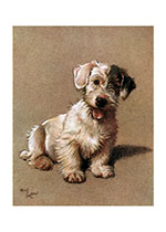 Barry the Sealyam (Cecil Aldin Dog Fun Animals Art Prints)