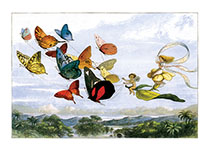 Fairy Flight with Butterflies (Fairyland Fairies Greeting Cards)