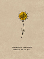 Everything Beautiful (Friendship Greeting Cards)